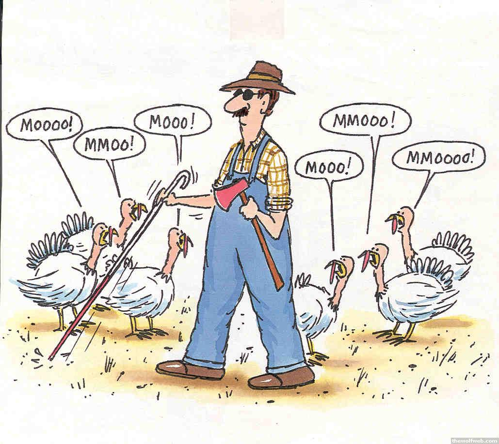 30 Funny thanksgiving jokes pictures